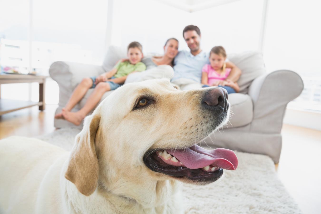 Vermífugo para cães: como e quando administrar?