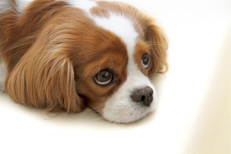 Cachorro com diarreia: veja o que fazer nessa situação