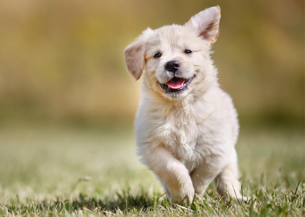 Doenças caninas: conheça as que mais atingem os filhotes