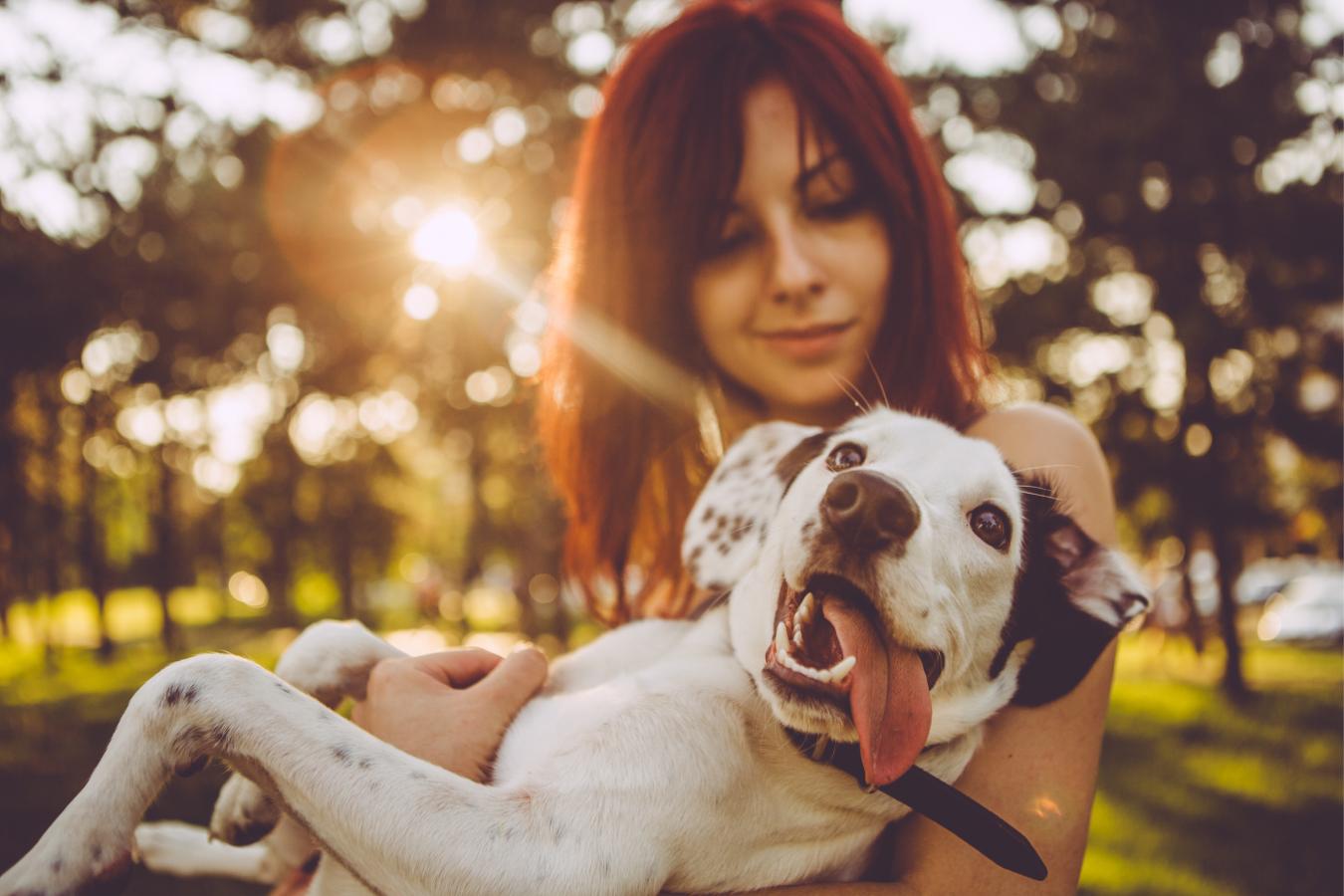 Cuide do seu amigão! Descubra aqui como tratar o mau hálito em cães